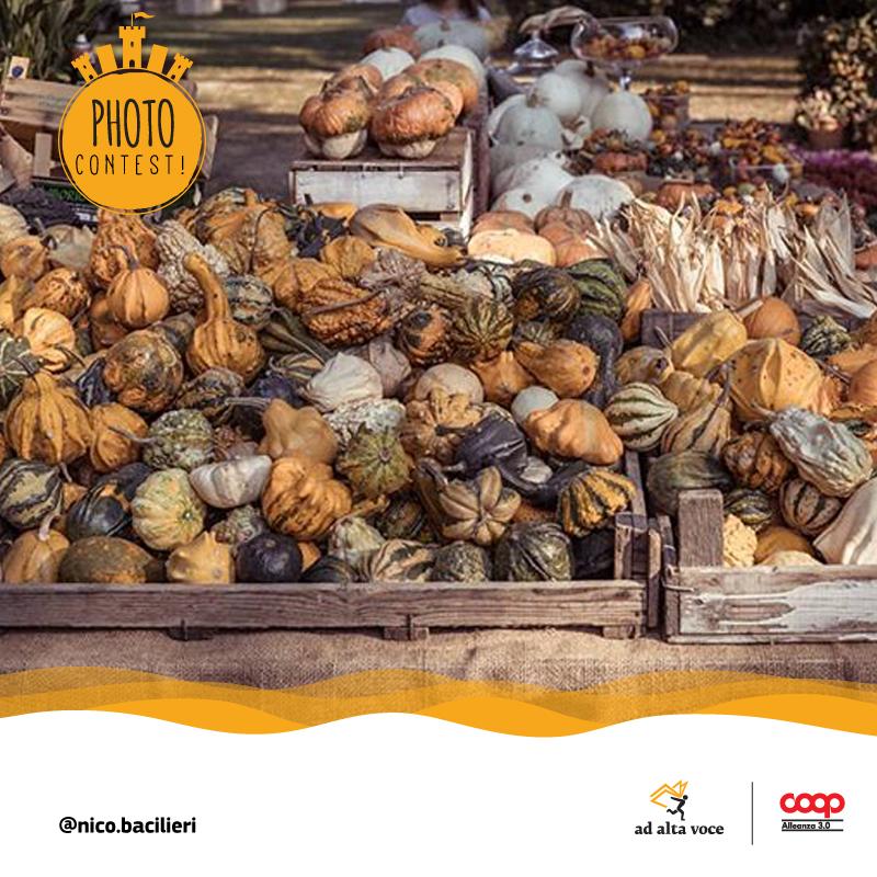 10_08-AAVSM-Zucche-Nico.bacilieri
